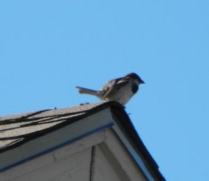 birdonroof