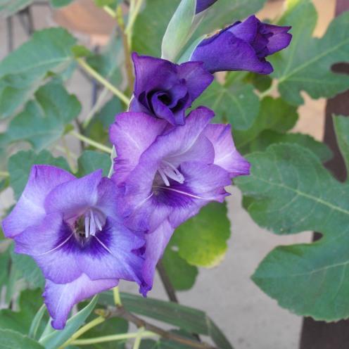 purple9