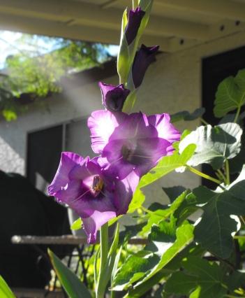 purpleflower4